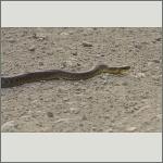 Bild 15 zum Bildarchiv Amphibien/Reptilien
