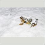 Bild 2 zum Bildarchiv Amphibien/Reptilien