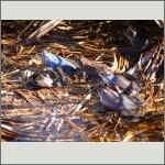 Bild 38 zum Bildarchiv Amphibien/Reptilien