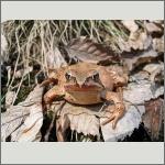 Bild 39 zum Bildarchiv Amphibien/Reptilien