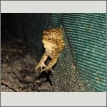 Bild 45 zum Bildarchiv Amphibien/Reptilien