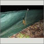 Bild 46 zum Bildarchiv Amphibien/Reptilien