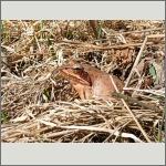 Bild 29 zum Bildarchiv Amphibien/Reptilien