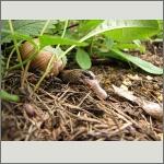Bild 23 zum Bildarchiv Amphibien/Reptilien