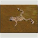 Bild 24 zum Bildarchiv Amphibien/Reptilien