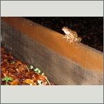 Bild 20 zum Bildarchiv Amphibien/Reptilien