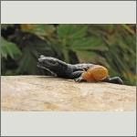 Bild 17 zum Bildarchiv Amphibien/Reptilien