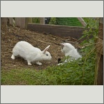 Bild 28 zum Bildarchiv Säugetiere