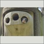 Bild 21 zum Bildarchiv Säugetiere