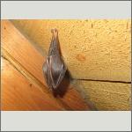 Bild 26 zum Bildarchiv Säugetiere