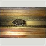 Bild 7 zum Bildarchiv Säugetiere