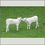 Bild 15 zum Bildarchiv Säugetiere