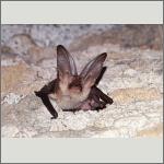 Bild 8 zum Bildarchiv Säugetiere