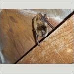 Bild 20 zum Bildarchiv Säugetiere
