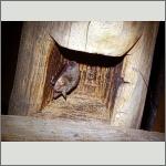Bild 5 zum Bildarchiv Säugetiere