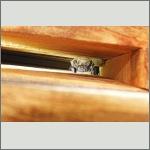 Bild 6 zum Bildarchiv Säugetiere