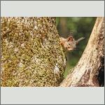 Bild 9 zum Bildarchiv Säugetiere