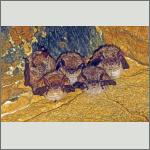 Bild 1 zum Bildarchiv Säugetiere