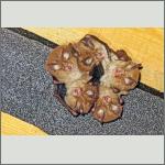 Bild 2 zum Bildarchiv Säugetiere