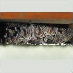 Bild 3 zum Bildarchiv Säugetiere