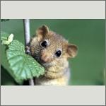 Bild 33 zum Bildarchiv Säugetiere