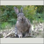 Bild 41 zum Bildarchiv Säugetiere