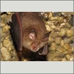 Bild 39 zum Bildarchiv Säugetiere