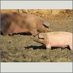 Bild 24 zum Bildarchiv Säugetiere