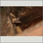 Bild 34 zum Bildarchiv Säugetiere