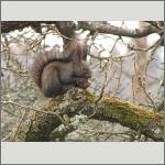 Bild 27 zum Bildarchiv Säugetiere