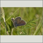 Bild 14 zum Bildarchiv Schmetterlinge