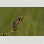 Bild 7 zum Bildarchiv Schmetterlinge