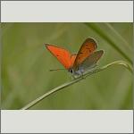 Bild 6 zum Bildarchiv Schmetterlinge
