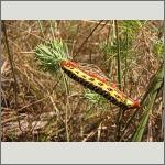 Bild 45 zum Bildarchiv Schmetterlinge