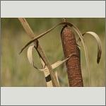 Bild 11 zum Bildarchiv Früchte/Samen