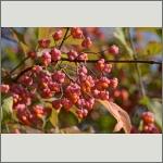 Bild 8 zum Bildarchiv Früchte/Samen