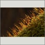 Bild 7 zum Bildarchiv Früchte/Samen