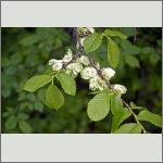Bild 6 zum Bildarchiv Früchte/Samen