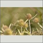 Bild 17 zum Bildarchiv Früchte/Samen