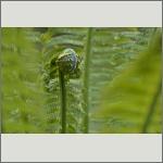Bild 29 zum Bildarchiv Sonstige Pflanzen