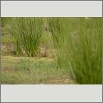 Bild 24 zum Bildarchiv Sonstige Pflanzen