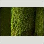 Bild 23 zum Bildarchiv Sonstige Pflanzen