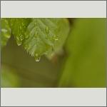 Bild 10 zum Bildarchiv Sonstige Pflanzen