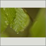 Bild 21 zum Bildarchiv Sonstige Pflanzen