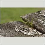 Bild 17 zum Bildarchiv Sonstige Pflanzen