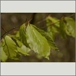 Bild 19 zum Bildarchiv Sonstige Pflanzen