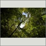 Bild 3 zum Bildarchiv Sonstige Pflanzen