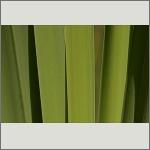 Bild 4 zum Bildarchiv Sonstige Pflanzen