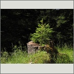 Bild 5 zum Bildarchiv Sonstige Pflanzen