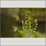 Bild 6 zum Bildarchiv Sonstige Pflanzen